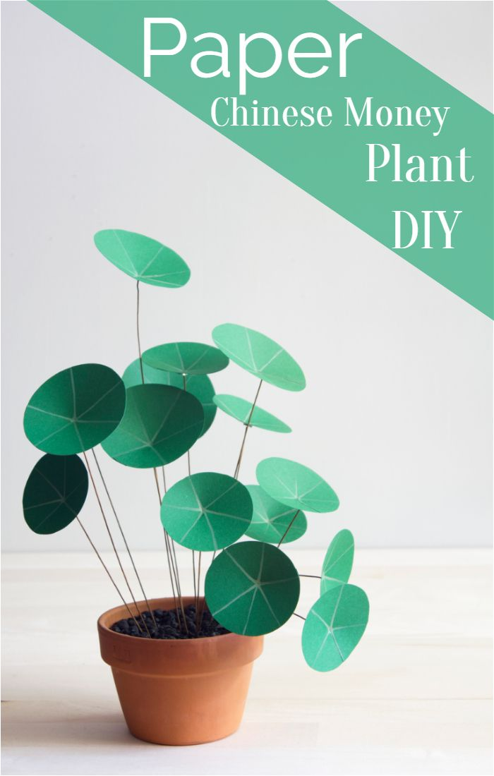 Paper Chinese Money Plant DIY