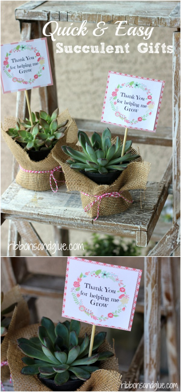 Quick And Easy Succulent Gifts